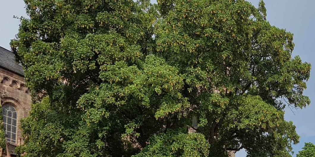 Baum Symbol mobile Sauerstoffgeräte