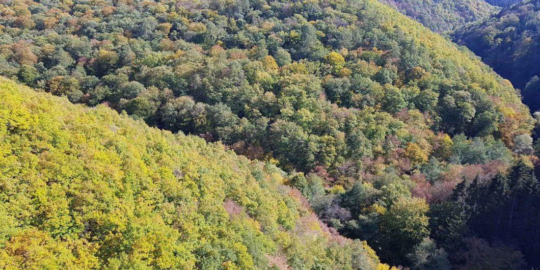 Atemkunst Herbstwald